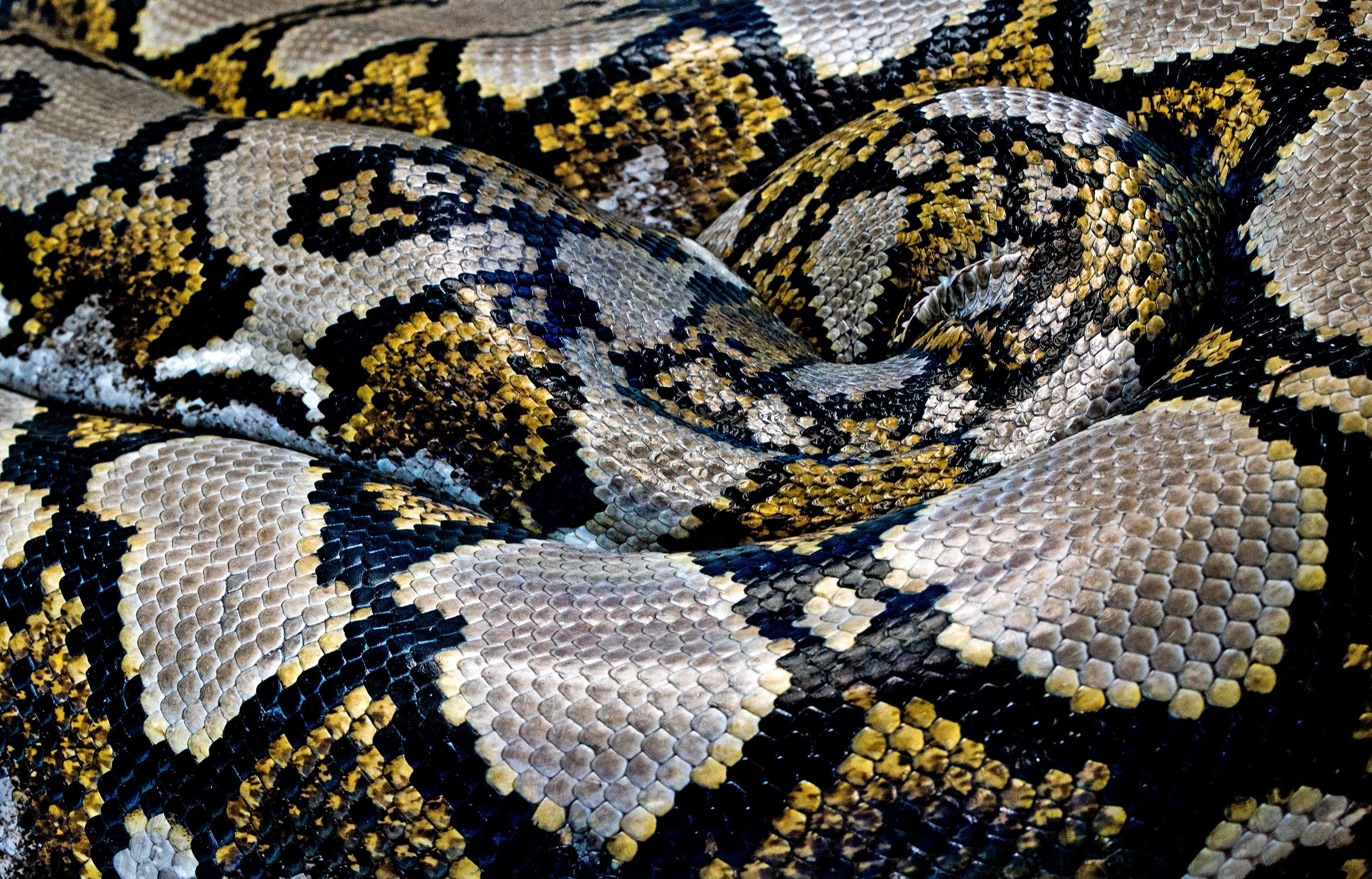 kígyó látásra